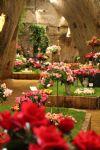 Les journées de la Rose en Touraine